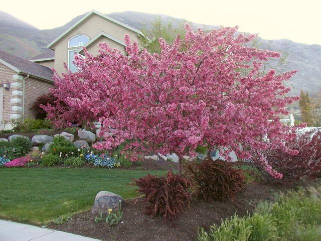 Preferred Flowering Trees BG45